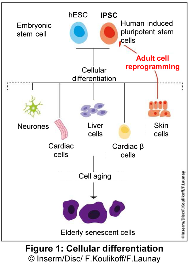 Erasing The Signs Of Aging In Cells Is Now A Reality